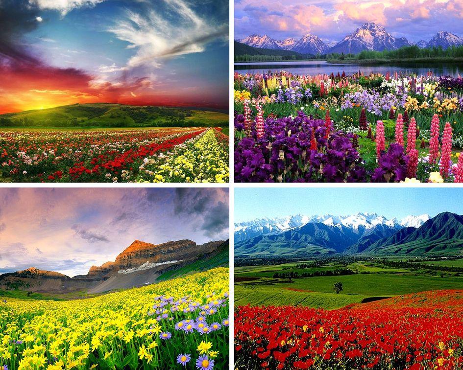 Цветочные долины в индии