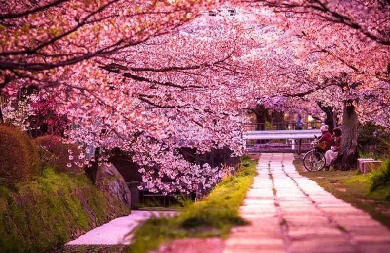 В Токио ботанический сад