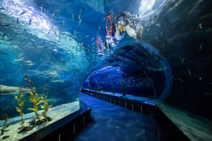 Тоннель океанариума в Пусане